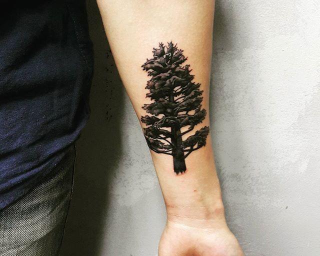 65 Tatuagens de árvores