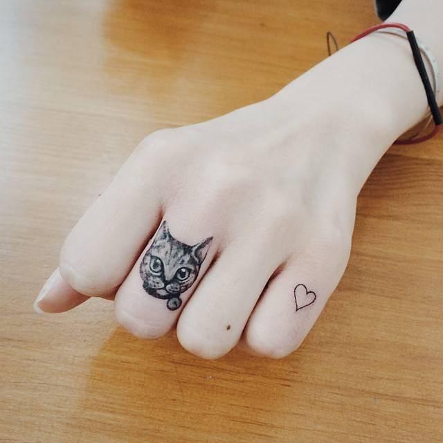 Gatinho carismático no dedo