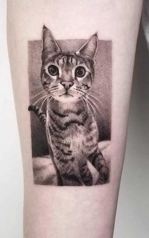 Que pode ser um gatinho.